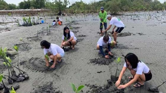 People planting mangroves